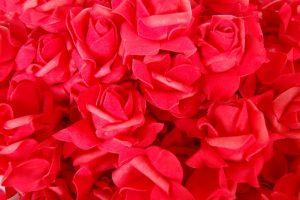 026. Decoratie roos rood